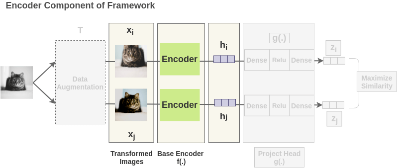 Encoder part of SimCLR